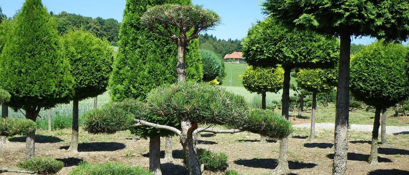 Pflanzen für ihren Garten auswählen